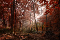 Dawn in the summer forest Royalty Free Stock Image