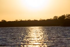 Dawn sun on the lake. In the park in nature Royalty Free Stock Image