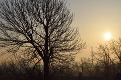 The dawn the sun the trees. An industrial city factories Royalty Free Stock Images