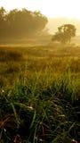 Dawn Of Sunrise Stock Afbeelding