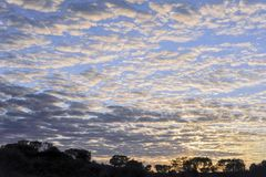 Dawn sunrise, over the outback of Western Australia, unique cloud formation, filling the frame of a landscape aspect composition.  royalty free stock photo