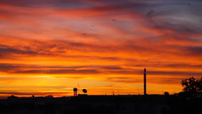 Dawn, sunrise or sunset over a suburban city skyline. Dawn over a suburban city skyline with clouds reflecting the orange sun with flocks of birds flying. Also stock video footage