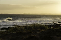 Dawn Surf Royalty Free Stock Images