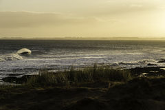 Dawn Surf Royalty Free Stock Image