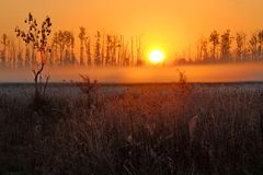 Dawn at swamps and meadows. Foggy dawn at swamps and meadows in Kampinos National Park, Central Poland royalty free stock images