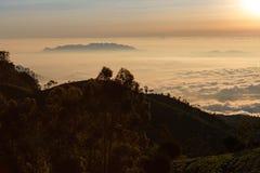Dawn at tea plantation. Near Lipton's Seat, Haputale, Sri Lanka royalty free stock image