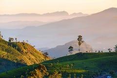 Dawn at tea plantation. Near Lipton's Seat, Haputale, Sri Lanka Royalty Free Stock Photos