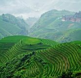 Dawn of Terraced field Royalty Free Stock Images