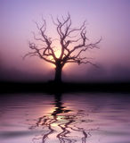 Dawn tree. A tree taken at dawn with a lake digitally added royalty free illustration