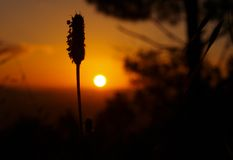 At dawn in Vigo, Spain Stock Photos