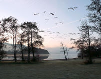Dawn vlucht Royalty-vrije Stock Fotografie