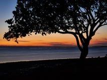 Dawn 2017 Wellington Point Australia Stock Afbeeldingen