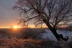 Dawn on a winter morning Royalty Free Stock Photography