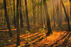 Dawn in wood HDR Royalty Free Stock Photo