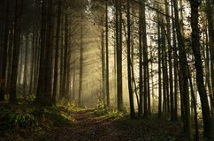 Dawn in the woods. A morning walk through the woods Stock Photo