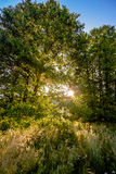 Dawn in the woods. Summer sunrise in the woods Royalty Free Stock Photo