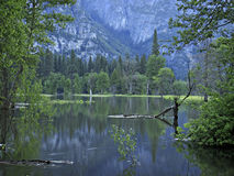 Dawn in Yosemite Valley. Trees and mountain at bottom of valley reflected on swollen river royalty free stock photos