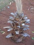 Dawno dawno temu był drzewkiem palmowym ja zdjęcia royalty free