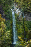 Dawson Falls. Found in some of New Zealand native bush Stock Photo