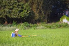 DAXIN, CHINA, 28 SEPTEMBER 2011: male worker spraying water over Stock Image