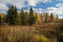 A day in the autumn forest stock photography
