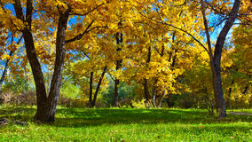 Day autumn park Royalty Free Stock Photo