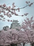 On the day of cherry blossoms in full bloom at Himeji-Jo Castle royalty free stock images