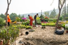 Around china - people planting flowers, workers. Day - chinese laborers manually planting flowers to beautify the landscape. Several people dressed in Stock Images