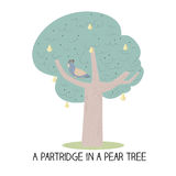 12 day of christmas - a partridge in a pear tree Royalty Free Stock Photos