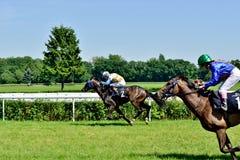 Day de presidente en la pista Partenice, raza para el grupo de 3 años de los caballos solamente III en Wroclaw en Juni 8, 2014 Foto de archivo