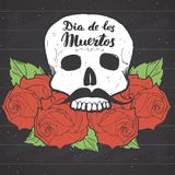 Day of the Dead, lettering quote with handdrawn skull and roses, vintage label, typography design or t-shirt print, vector illustr Royalty Free Stock Image