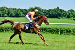 Day du Président à la voie Partenice, course pour le groupe de 3 ans de chevaux seulement III à Wroclaw sur Juni 8, 2014 Photo libre de droits
