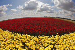 The day in fields flowers Stock Photos
