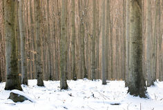 Day Forest Scene Royalty Free Stock Images