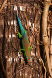 Day gecko on tree Royalty Free Stock Images