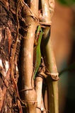 Day gecko on tree Stock Photo
