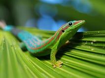 Day gekko close-up. Macro of gecko in natural habitat royalty free stock photo