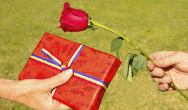 Day of giving a Rose and a Book Royalty Free Stock Photo