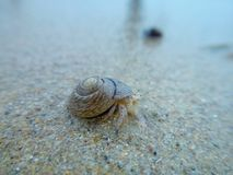 A hermit crab is hit by waves on the beach of dapeng, shenzhen. stock photography