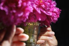 Day human hand red peony backgrounds old mirror reflection sunlight summer. Human hand water glass reflection indoors close-up old mirror sunlight Royalty Free Stock Photography