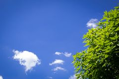 Sunny day with some clouds. The day I captured this photo its was over 40 Celsius outside Royalty Free Stock Photo