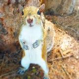 Squirrel Days Stock Photos