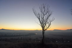 Day Light. Single tree at sunrise in Fagaras Royalty Free Stock Photography