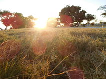 Day lights. A dry grass with beautiful sunshines Stock Images