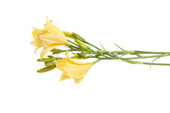 Day lilies bouquet Stock Photo