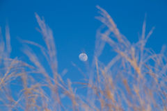 Day moon Royalty Free Stock Image