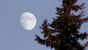 Day moon. Full moon and tree. Summer. Afternoon stock video