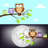 Day and night owl Royalty Free Stock Photo