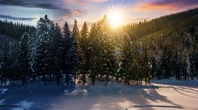 Day and night concept in winter spruce forest. Day and night time change concept in winter spruce forest. beautiful scenery of magic landscape Stock Images