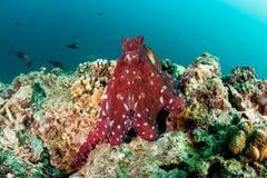 Day Octopus Royalty Free Stock Photos